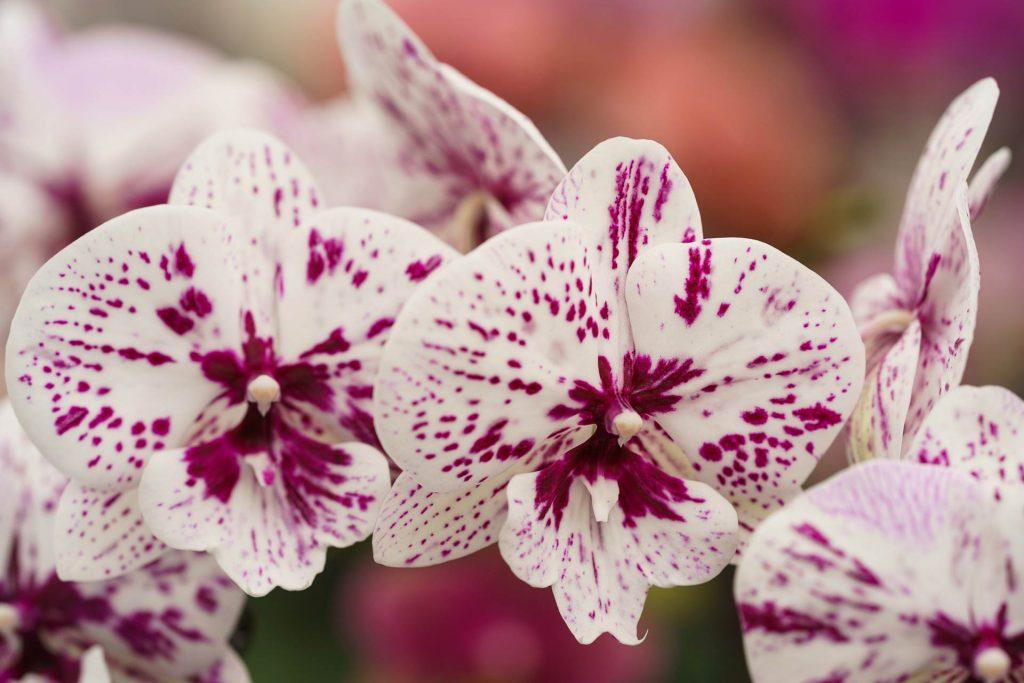 Hark Orchideen - Qualitätsmanagement